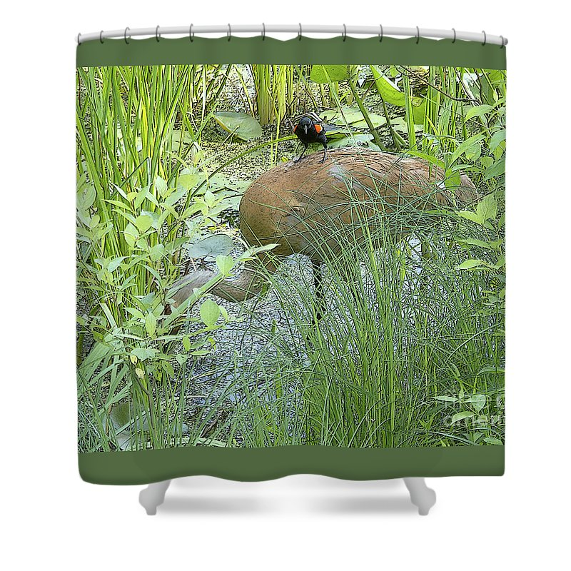 Ann Horn Shower Curtain featuring the photograph Free Ride by Ann Horn