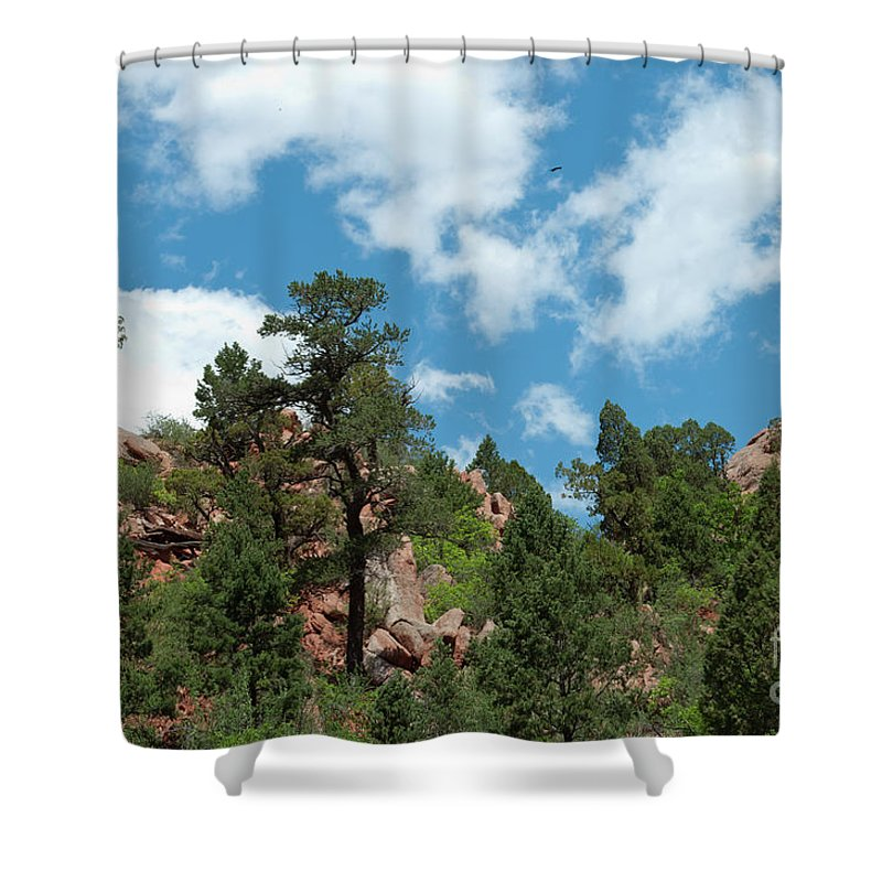 Garden Of The Gods Shower Curtain featuring the photograph Freebird by Paulette B Wright