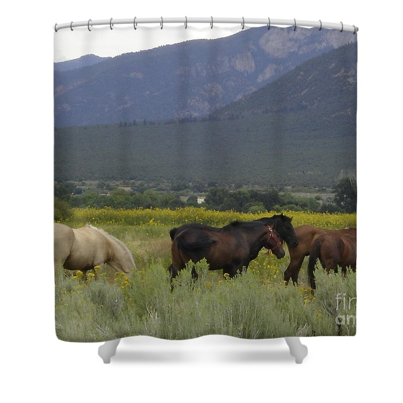 Horses Shower Curtain featuring the photograph Freedom II by Mary Rogers
