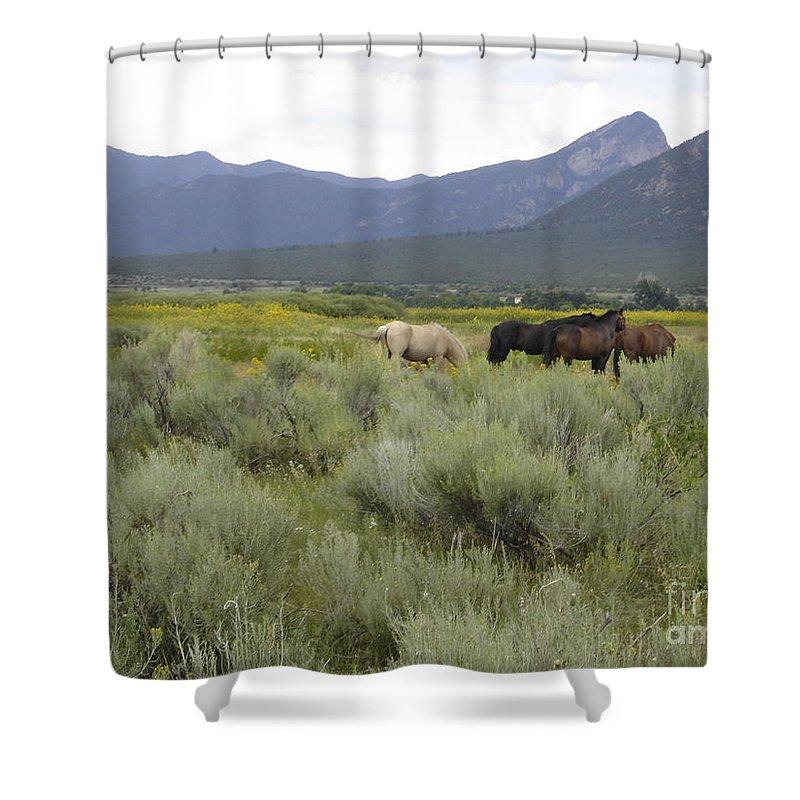 Horses Shower Curtain featuring the photograph Freedom by Mary Rogers