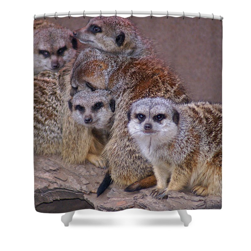 Mer Cats Shower Curtain featuring the photograph Freezing Meer Cats by Heather Coen