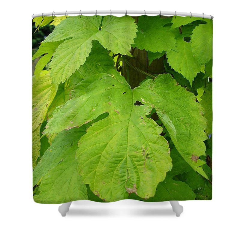 Hop Shower Curtain featuring the photograph Fresh English Golden Hop by Susan Baker
