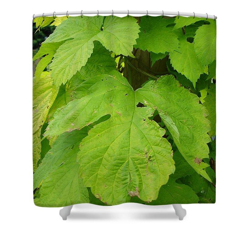 Hop Shower Curtain featuring the photograph Fresh English Golden Hop by Susan Baker