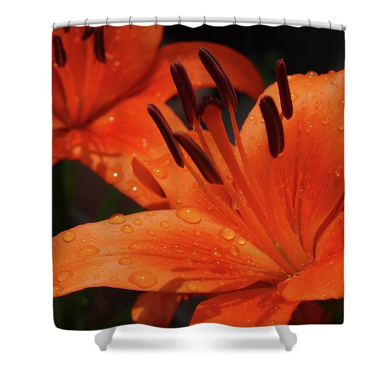 Lilly Shower Curtain featuring the photograph Fresh Floral Delight by Teri Schuster