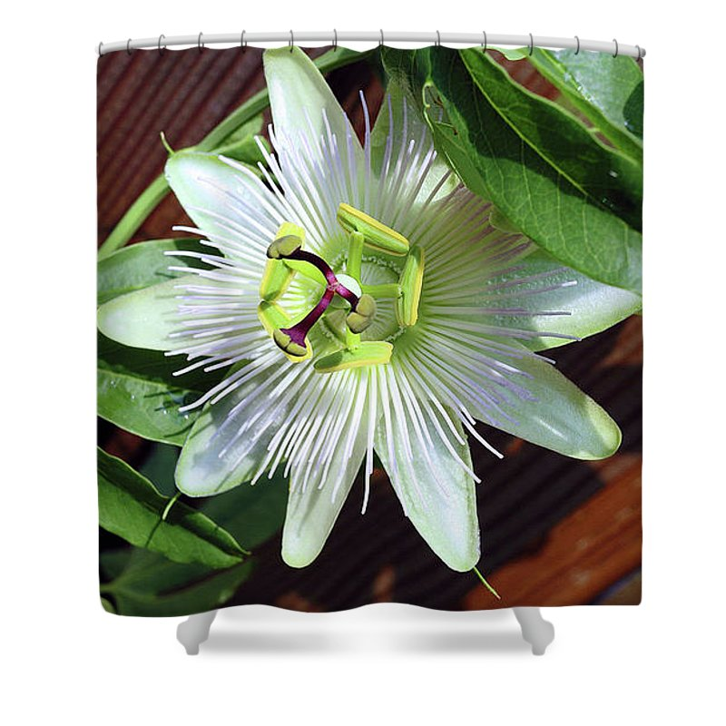 Passion Flower Shower Curtain featuring the photograph Fresh White Passion Flower by Davids Digits