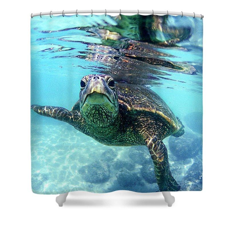 Sea Shower Curtain Featuring The Photograph Friendly Hawaiian Turtle By Sean Davey