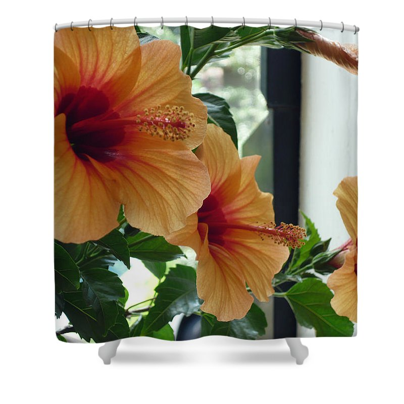 Photography Flower Floral Bloom Hibiscus Peach Shower Curtain featuring the photograph Friends For A Day by Karin Dawn Kelshall- Best