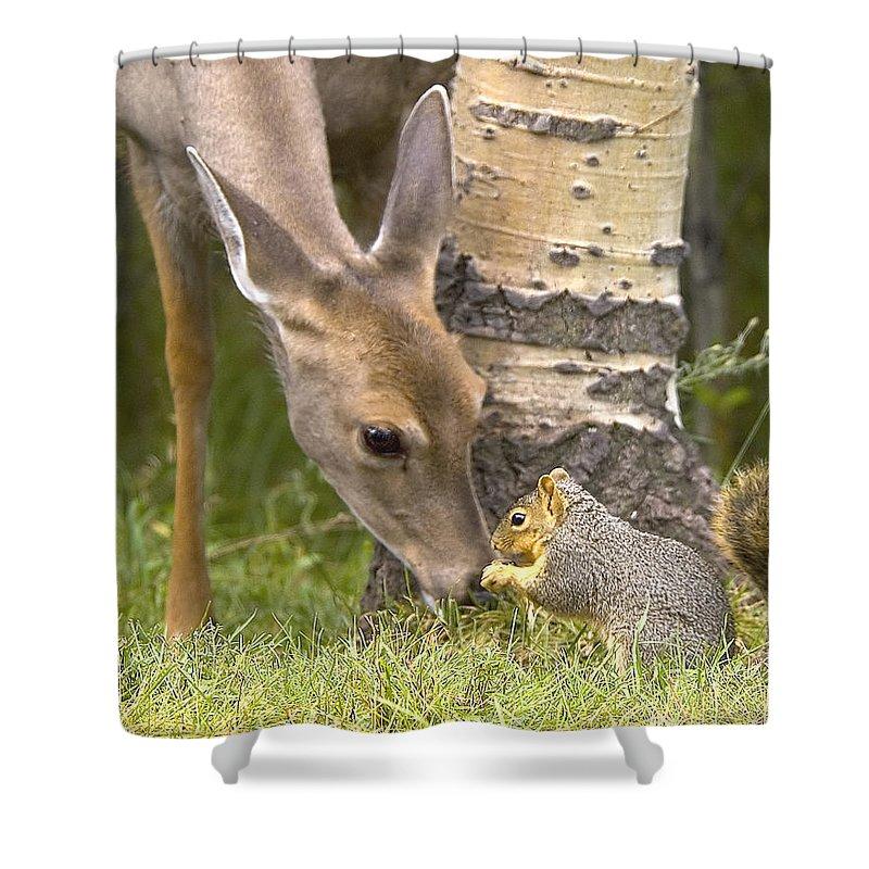 Deer Shower Curtain featuring the photograph Friends by Gary Beeler