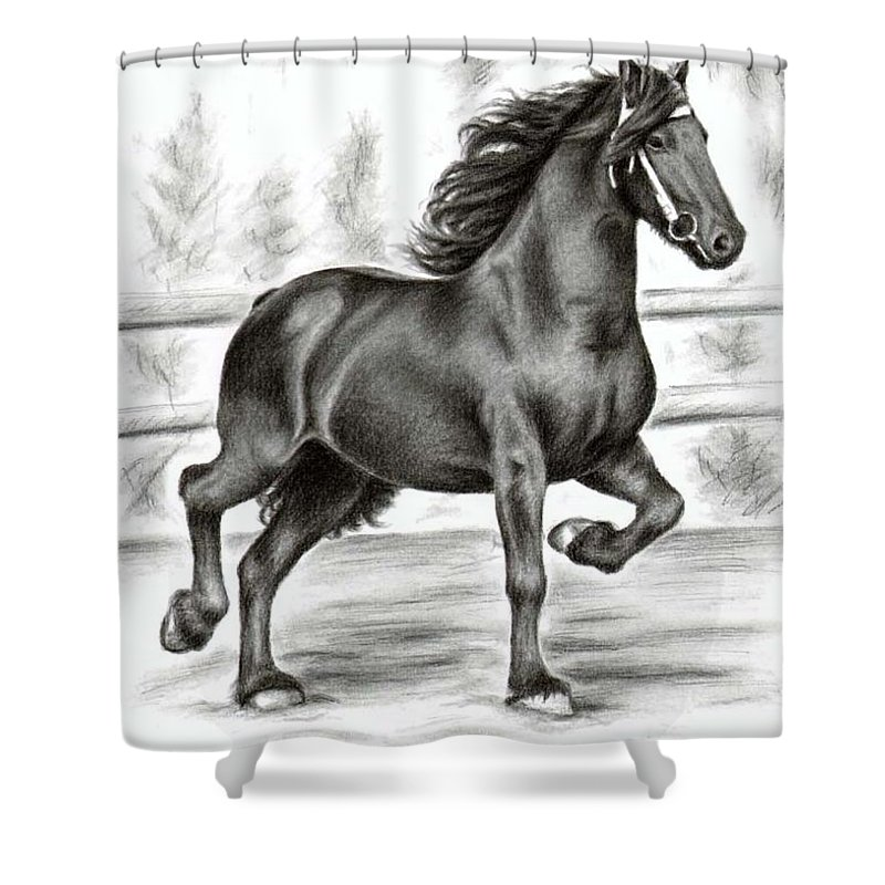 Horse Shower Curtain featuring the drawing Friesian Horse by Nicole Zeug
