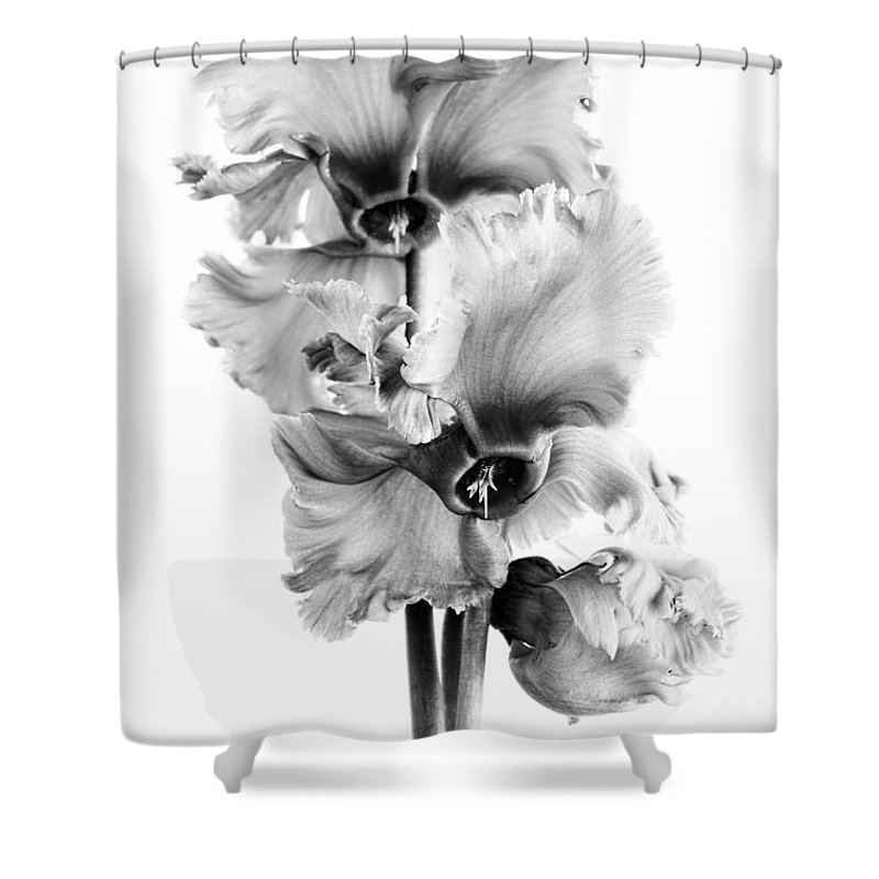 Pink Cyclamen Shower Curtain featuring the photograph Frilly Edged Cyclamen Flowers Monochrome by Ann Garrett