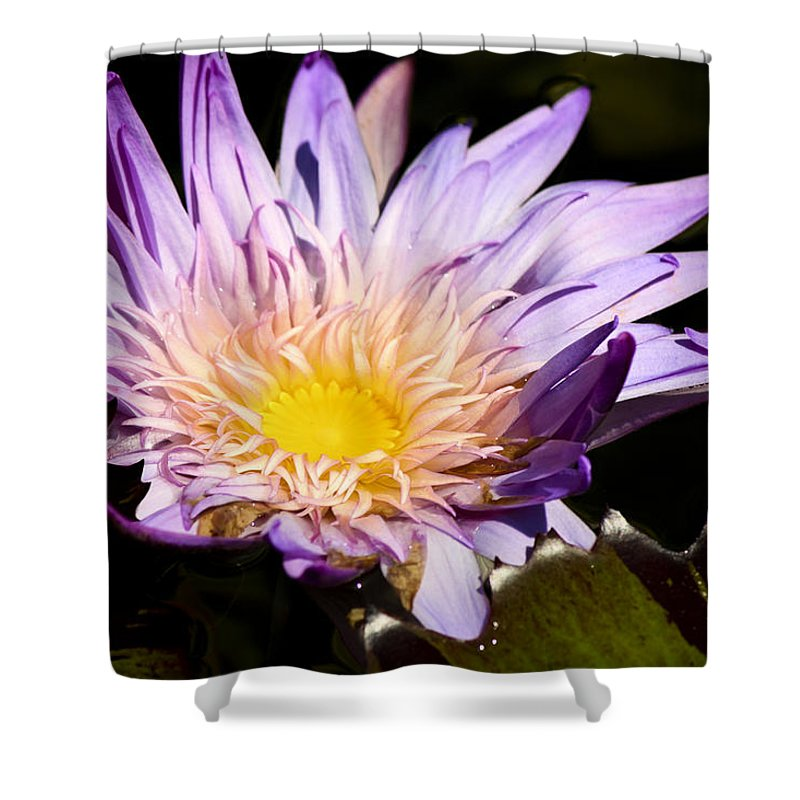 Purple Shower Curtain featuring the photograph Frilly Lilly by Teresa Mucha