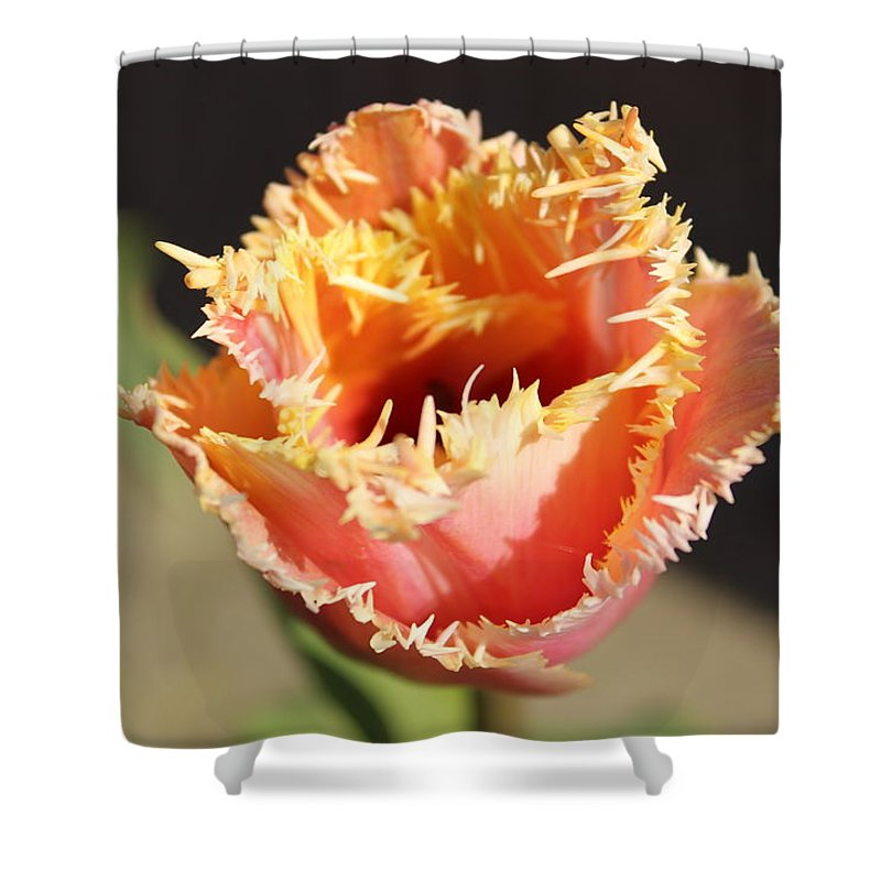 Fringed Tulip Shower Curtain featuring the photograph Fringed Tulip by Sherri Keene