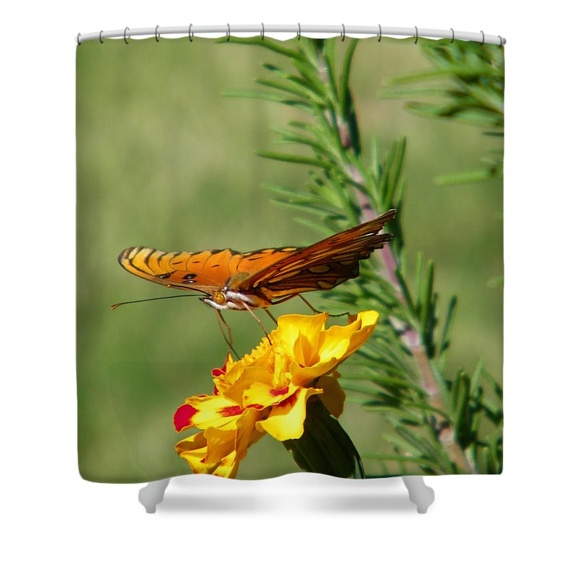Fritillary Shower Curtain featuring the photograph Fritillary Flitterby by Gale Cochran-Smith