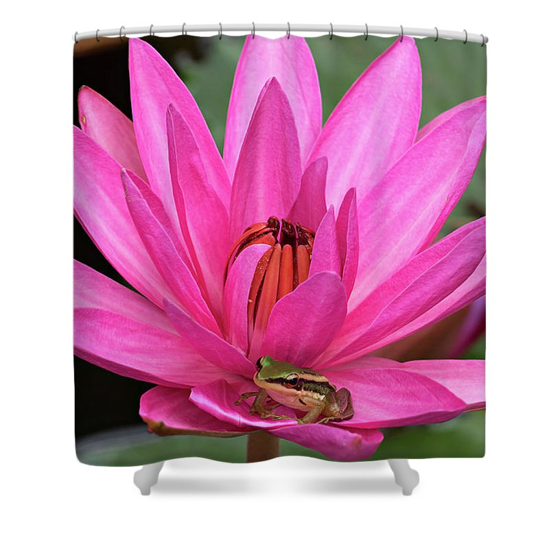 Lotus Shower Curtain featuring the photograph Frog Prince by Lik Batonboot