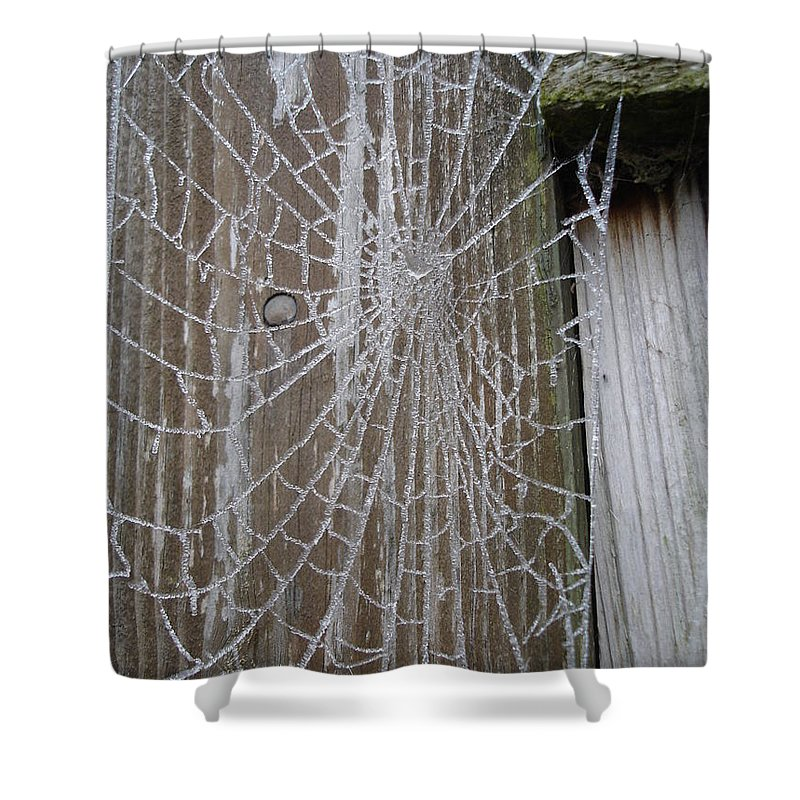 Winter Shower Curtain featuring the photograph Frosty Web by Susan Baker