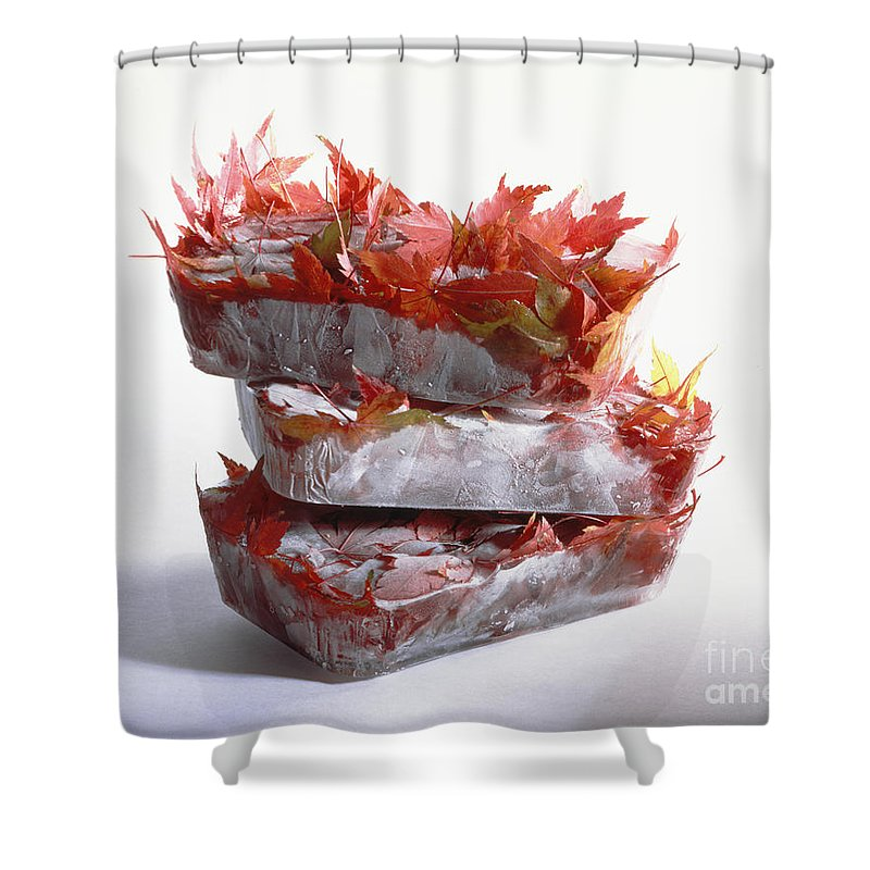 Composition Shower Curtain featuring the photograph Frozen Maple Leaves by Stefania Levi