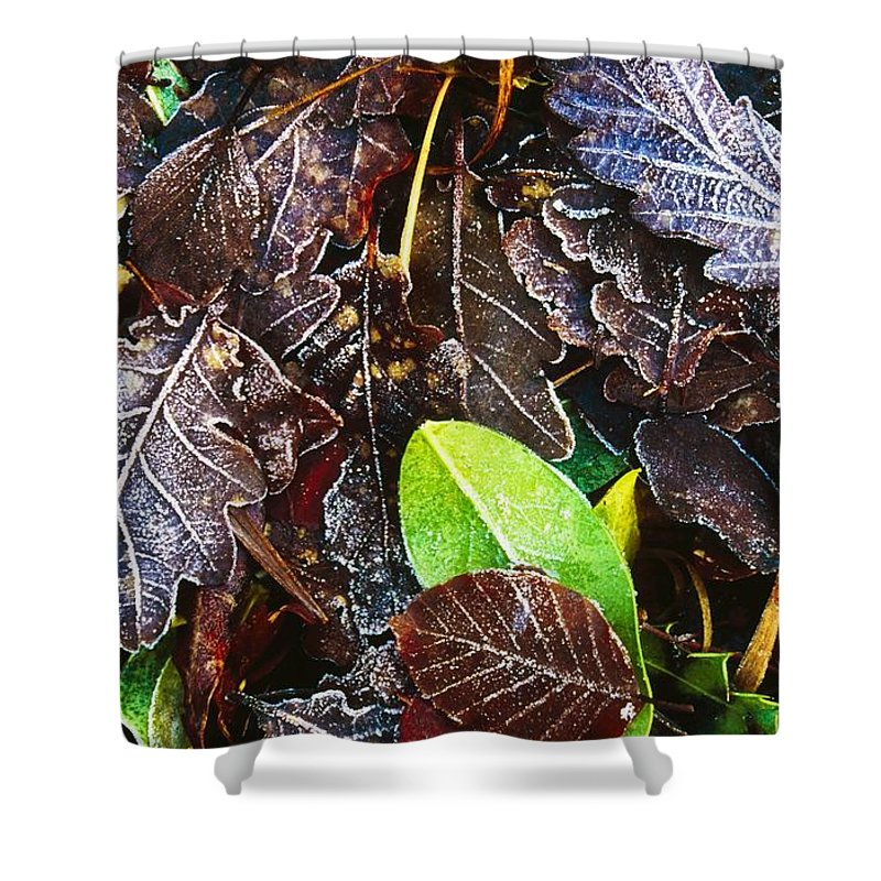 Cold Shower Curtain featuring the photograph Frozen Oak Leaves, Glenveagh National by Gareth McCormack