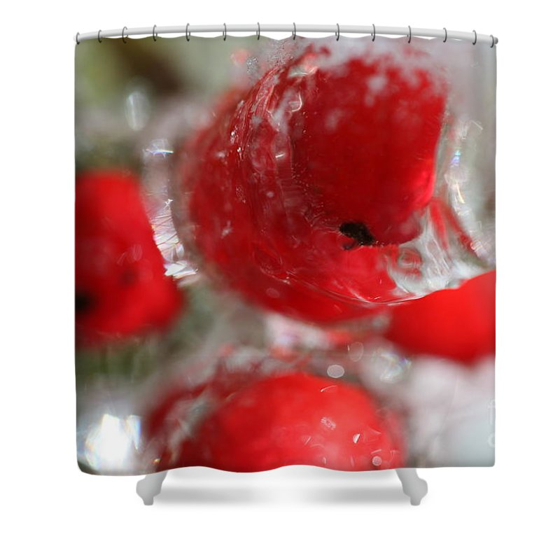 Berries Shower Curtain featuring the photograph Frozen Winter Berries by Nadine Rippelmeyer