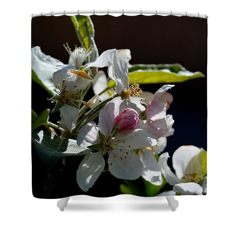 Fruit Tree Blossom Shower Curtain featuring the photograph Fruit Tree Blossom 1 by Todd Hostetter