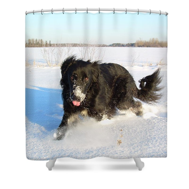 Dog Shower Curtain featuring the photograph Fun In The Snow Running by Kent Lorentzen