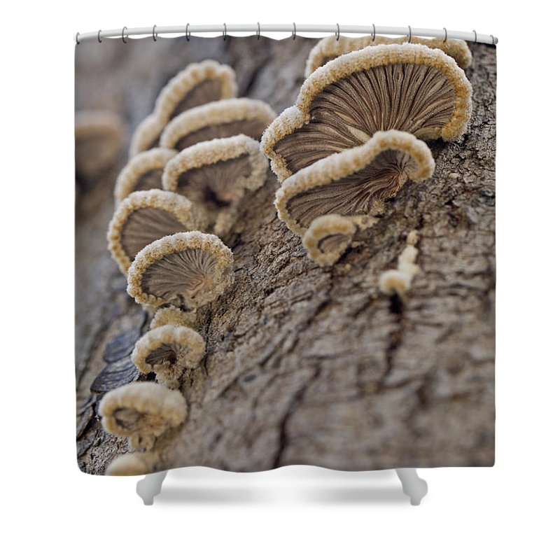 Poisonous Shower Curtain featuring the photograph Fungui Growing On A Tree Trunk by Alon Meir