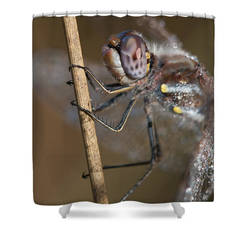 Aquatic Insects Shower Curtain featuring the photograph Funny Face by Robert Potts