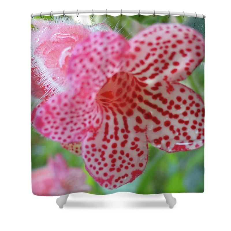 Flowers Shower Curtain featuring the photograph Furry Flora by Trish Hale