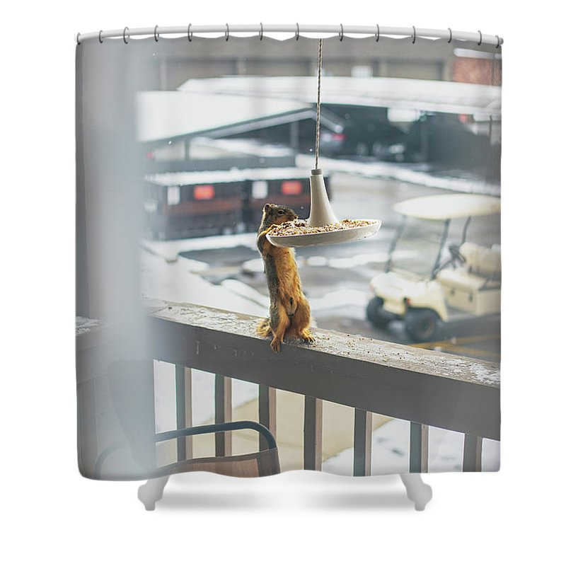 Animal Shower Curtain featuring the photograph Furry Friend by Anton Shelepov