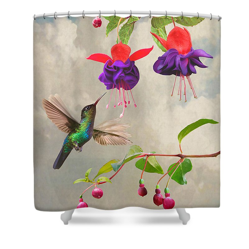 Hummingbird Shower Curtain Featuring The Digital Art Fuchsia And By IM Spadecaller