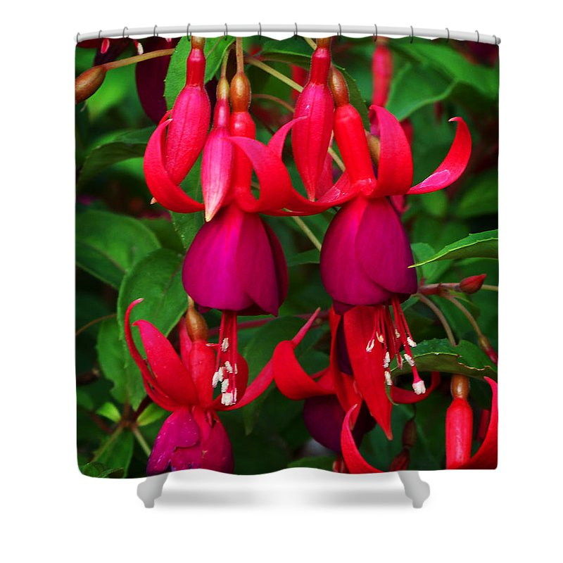 Flowers Shower Curtain featuring the photograph Fuschia Heron by Anthony Jones