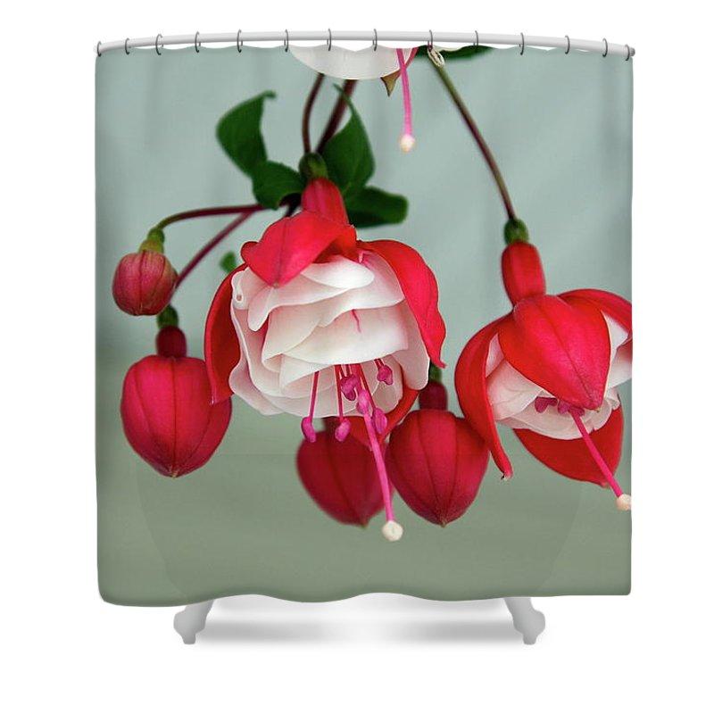 Fuschia Shower Curtain featuring the photograph Fuschia by Sally Weigand