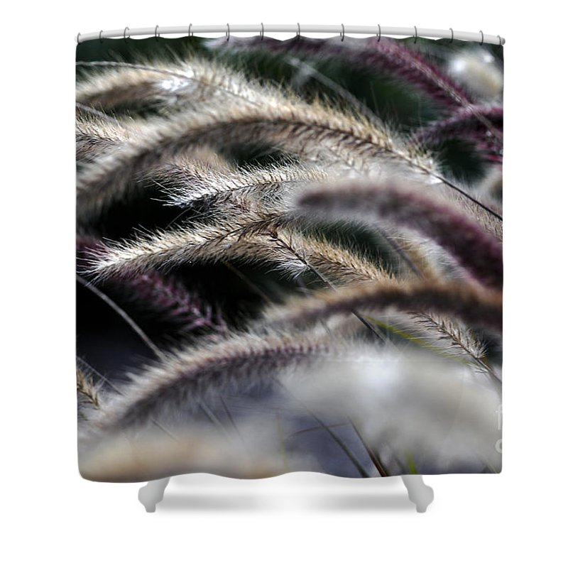 Clay Shower Curtain featuring the photograph Fuzzy by Clayton Bruster
