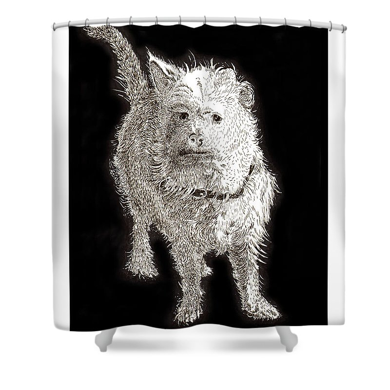 Ink Drawings Of Dogs  Dog Prints  Prints Of Dogs  Pen & Ink Drawings Of Dogs  Cute Black & White Dog Prints  Shower Curtain featuring the painting Fuzzy Molly by Jack Pumphrey