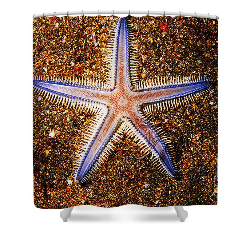Animal Art Shower Curtain featuring the photograph Galapagos Colorful Seastar by Ed Robinson - Printscapes
