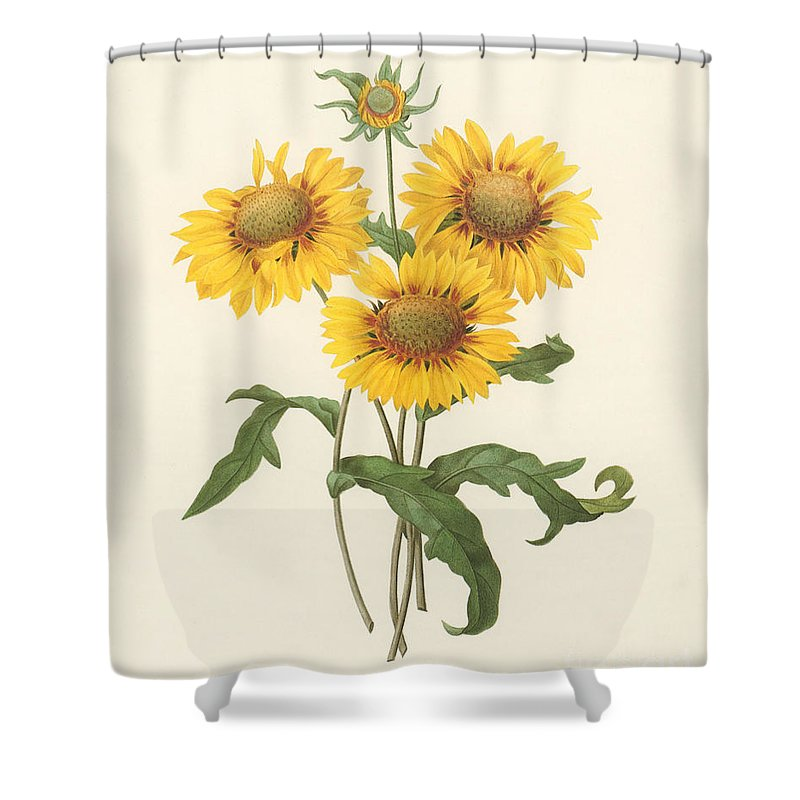 1833 Shower Curtain featuring the photograph Galardia by Granger