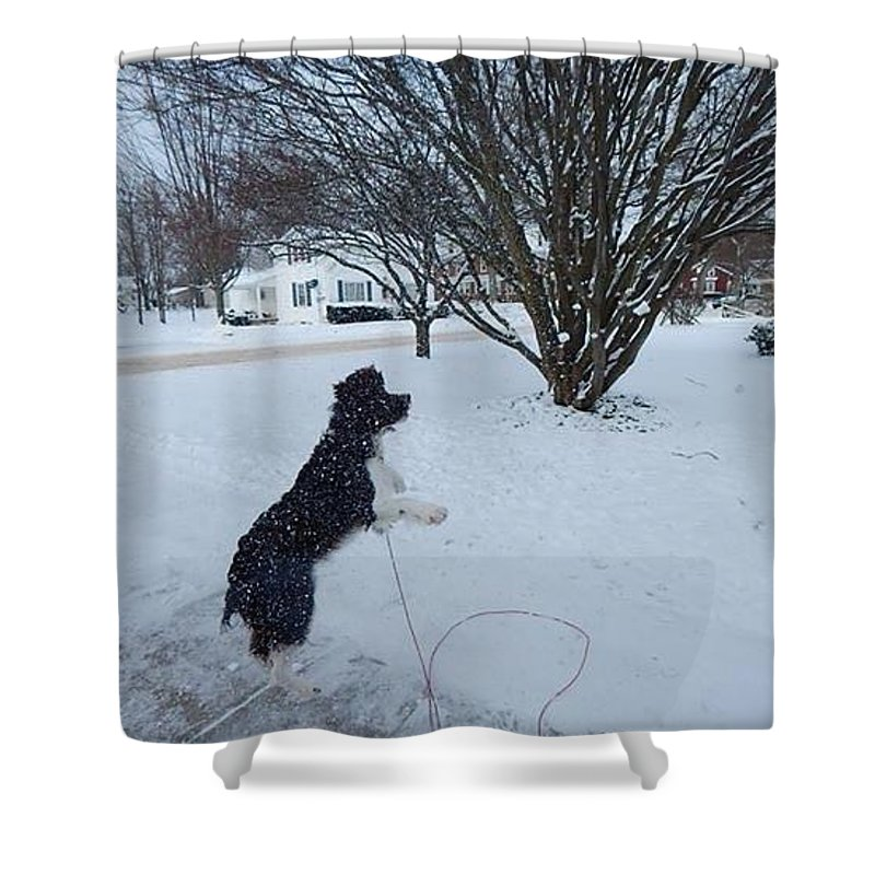 Shower Curtain featuring the photograph Galaxy Dog by Avery McCullough