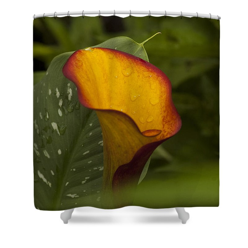 St. Clair County Shower Curtain featuring the photograph Garden Beauty by Paul Cannon