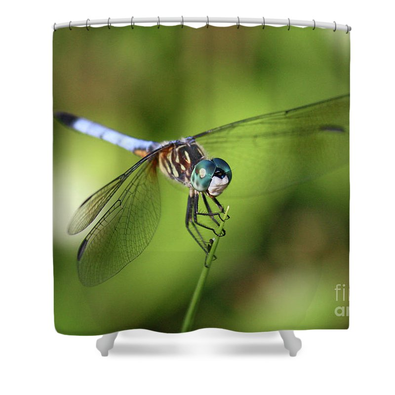 Dragonfly Shower Curtain featuring the photograph Garden Dragonfly by Carol Groenen