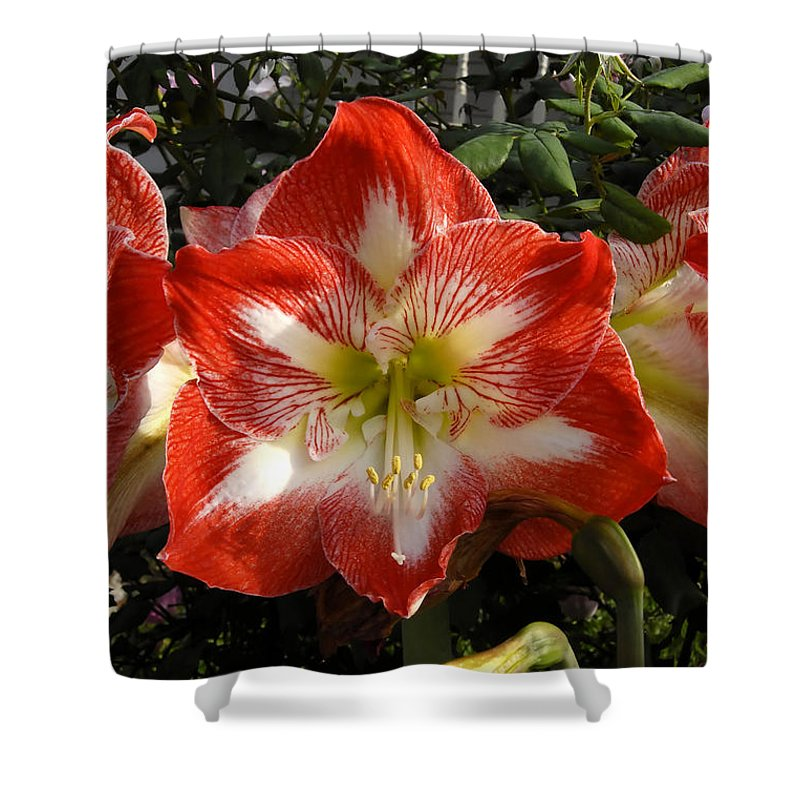 Garden Shower Curtain featuring the photograph Garden Flowers by David Lee Thompson