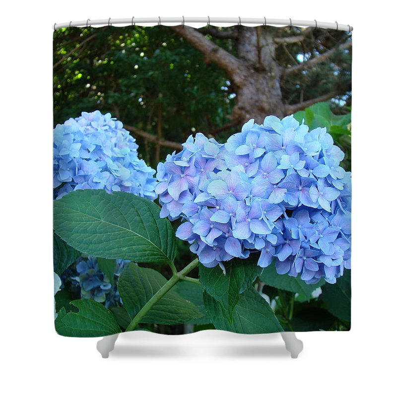 Hydrangea Shower Curtain featuring the photograph Garden Landscape Blue Hydrangeas Art Print Baslee Troutman by Baslee Troutman