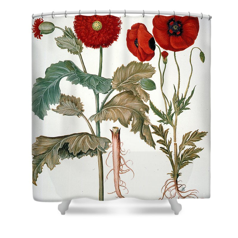 1613 Shower Curtain featuring the photograph Garden Poppy by Granger