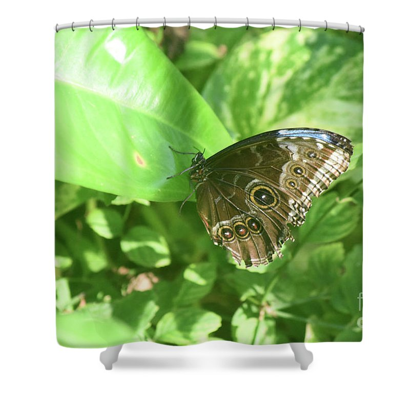 Blue-morpho Shower Curtain featuring the photograph Garden With A Blue Morpho Butterfly With Wings Closed by DejaVu Designs