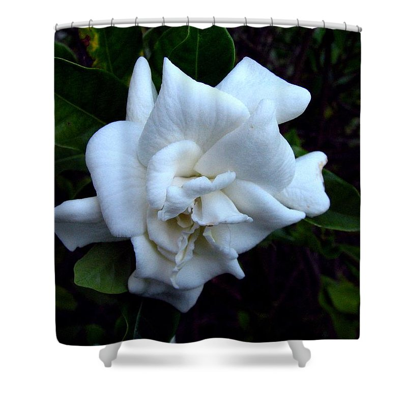 Gardenia Shower Curtain featuring the photograph Gardenia 3 by J M Farris Photography