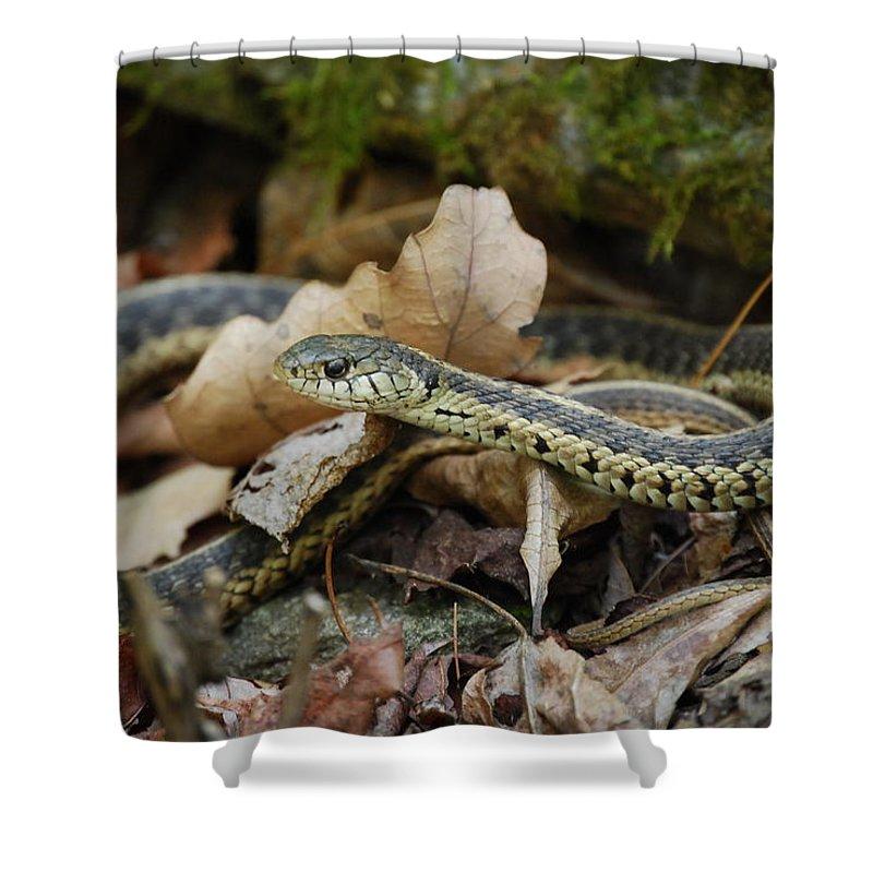 Snake Shower Curtain featuring the photograph Garter Snake by Eric Liller