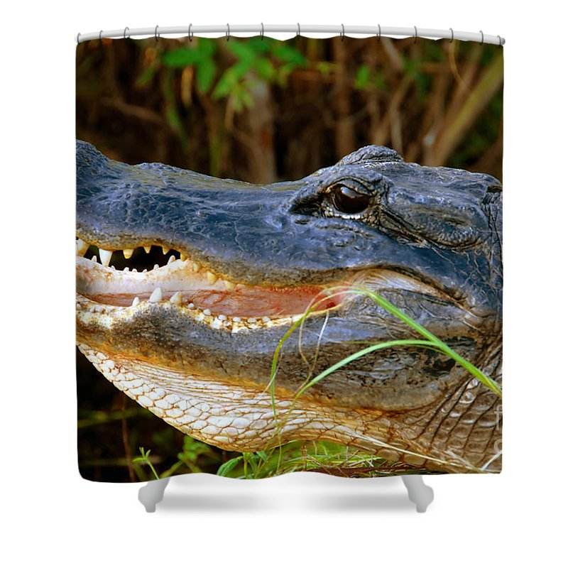 Alligator Shower Curtain featuring the photograph Gator Head by David Lee Thompson