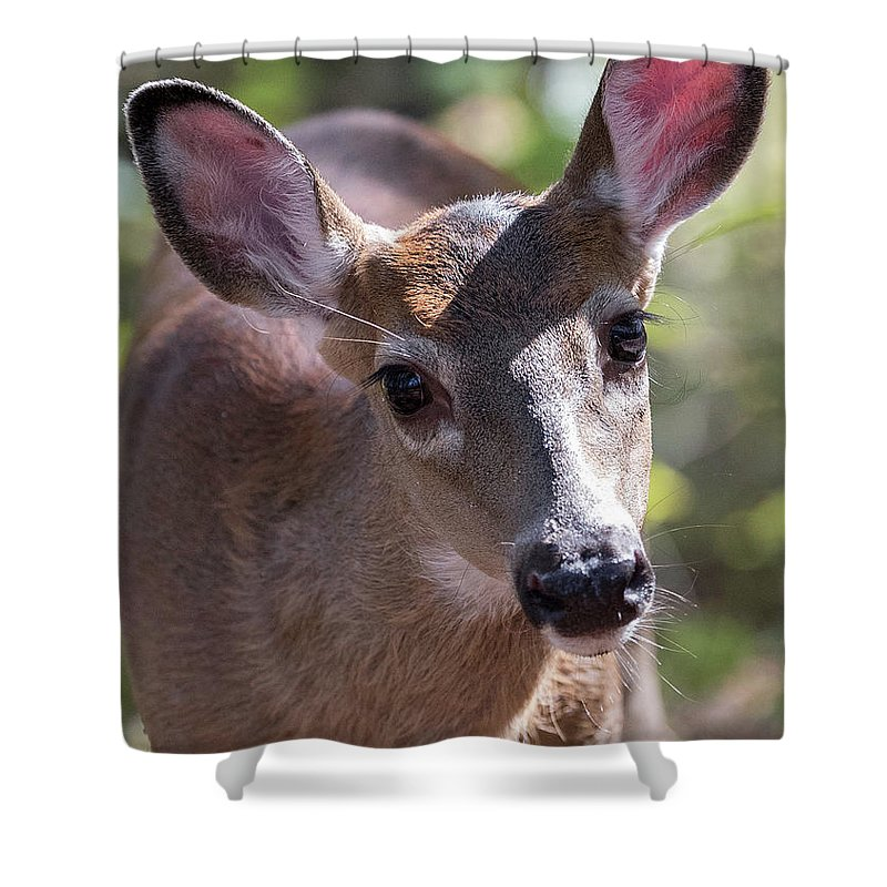 This Little Button Buck Was So Curious Of Me Shower Curtain featuring the photograph Gaze Of Innocence by Everet Regal
