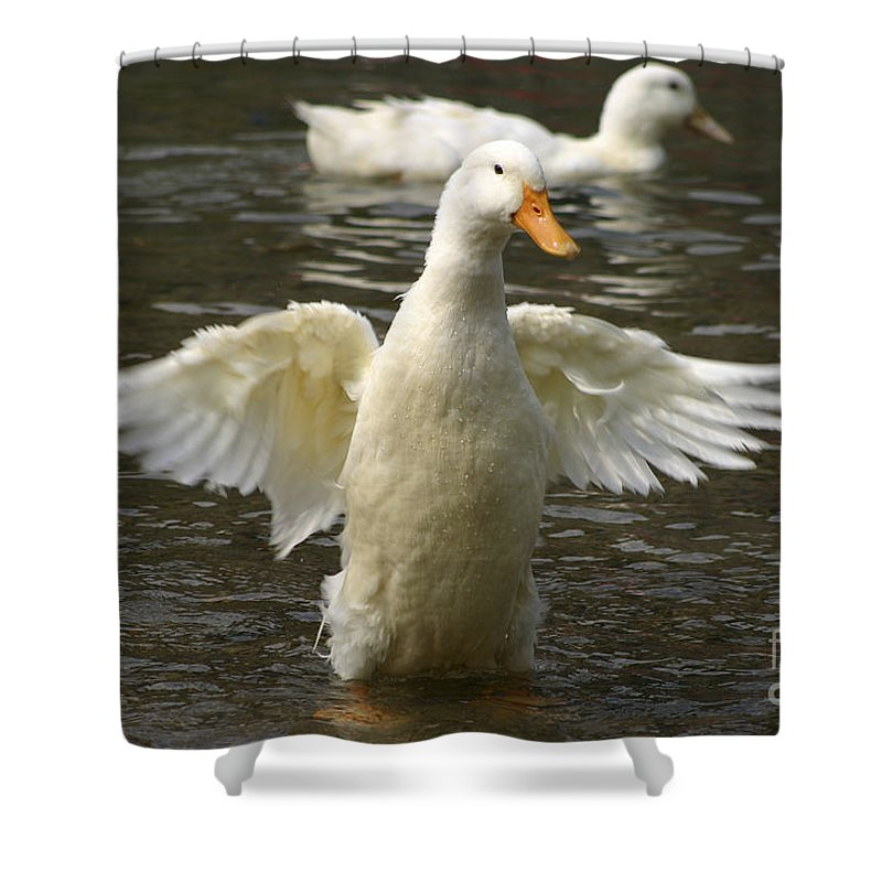Ducks Shower Curtain featuring the photograph Geese In The Water by Danny Yanai