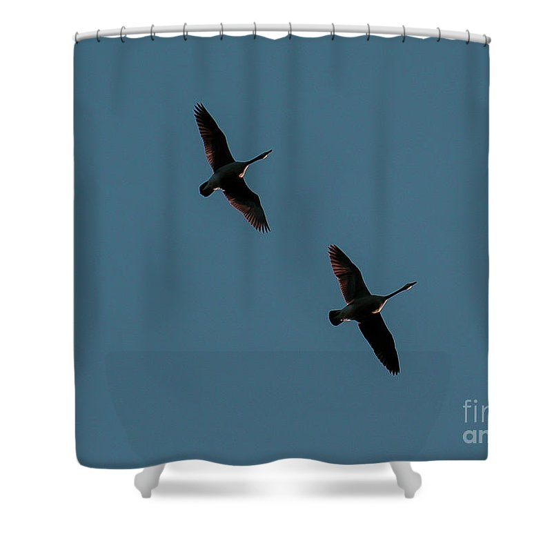 Geese Shower Curtain featuring the photograph Geese Pair by Mim White