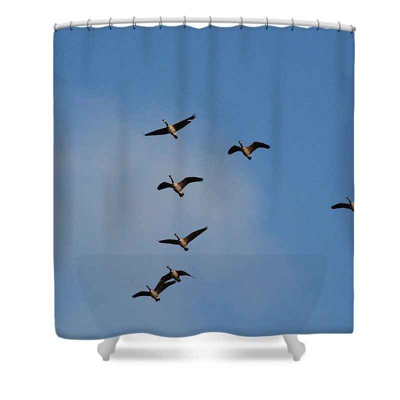 Geese Shower Curtain featuring the photograph Geese by Pamela Peters