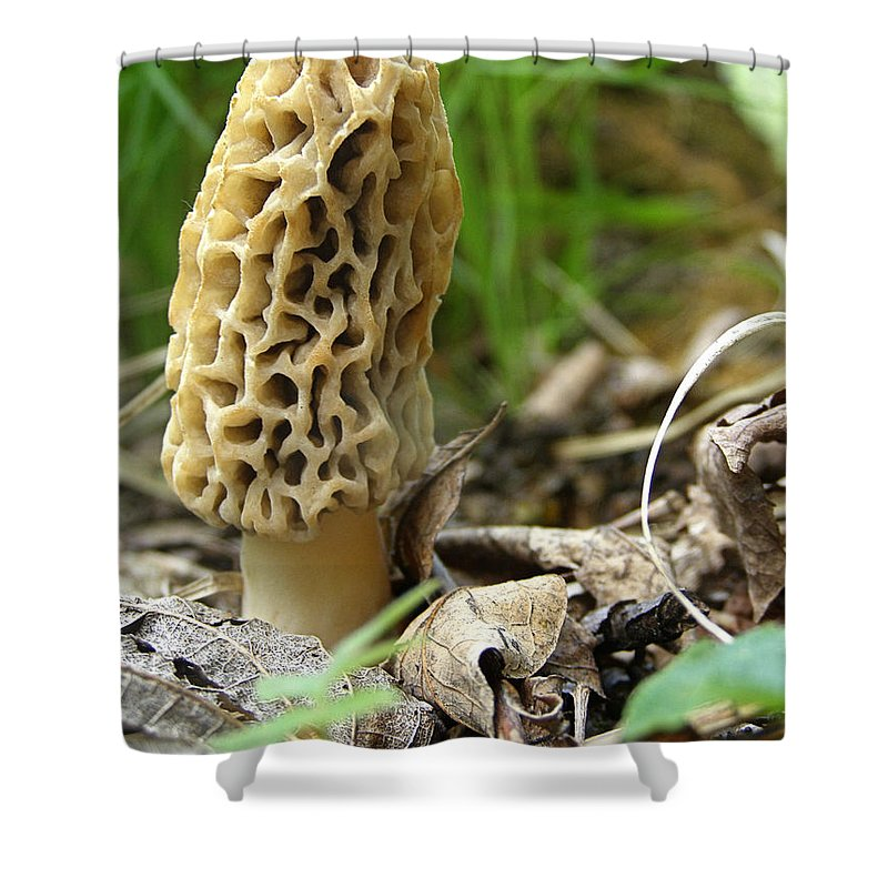 Morel Shower Curtain featuring the photograph Gem Of The Forest - Morel Mushroom by Angie Rea